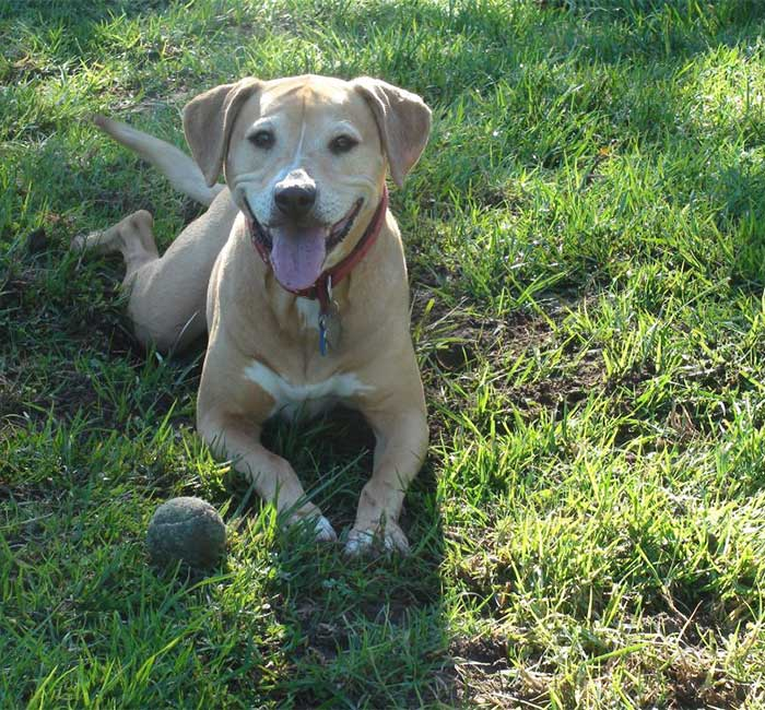 Dog and ball on grass