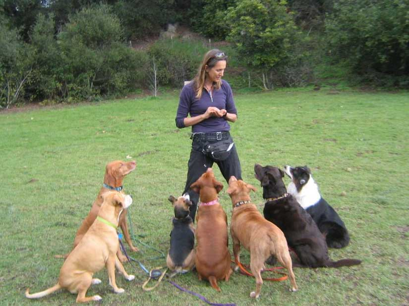 Sara teaching seven dogs
