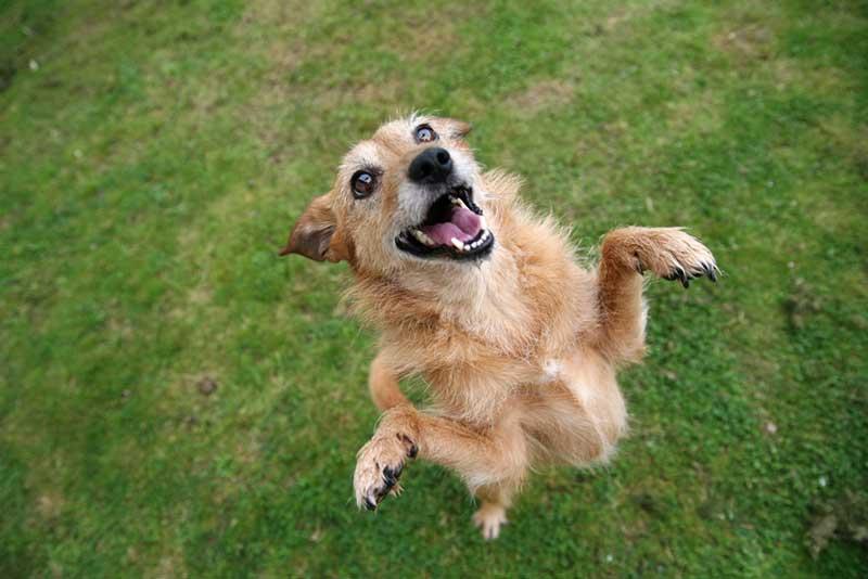 happy dog jumping toward us