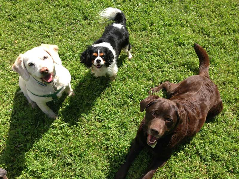 Three attentive dogs looking up at us