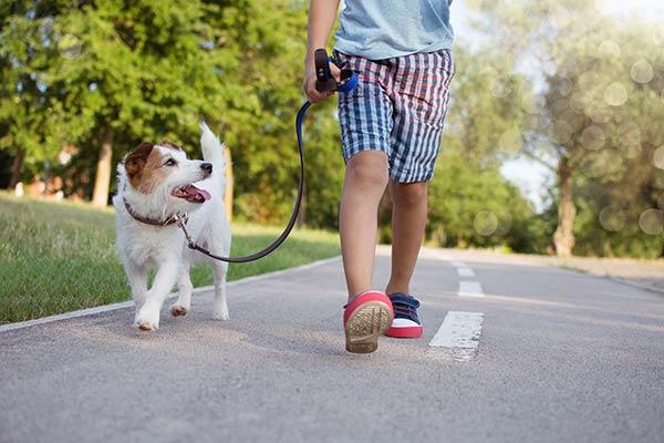 boy and dog on a walk